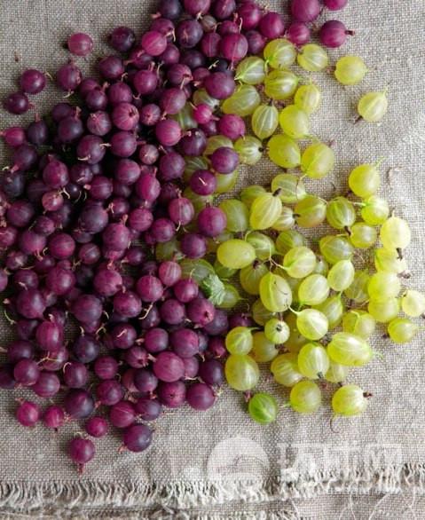 来自斯德哥尔摩 stermalms集市的鹅莓。