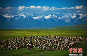 盛夏避暑好去处 新疆五大草原清凉游