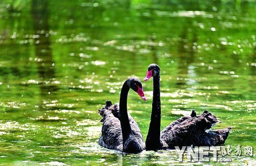 黑妞/圆明园中的大黑和黑妞相亲相爱,形影不离拍于2012年6月17日