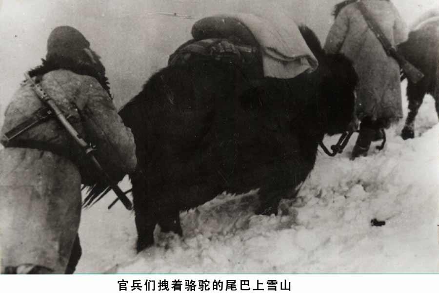 吴尾巴动物图片