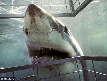 孩子被鲨鱼咬断肢体_鲨鱼袭人事件发生在韦奇岛附近.