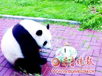 动物园内7月份过生日的小动物不少