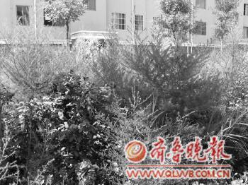 开发商撤走没和花苑v花苑安康图纸绿化带杂代表fj中什么草丛物业基础图片