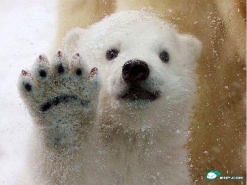 搜罗全球最萌最可爱小动物(组图)