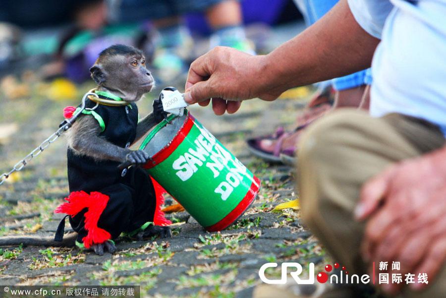 猴子 雅加达/当地时间2012年7月11日,印度尼西亚雅加达,带着面具的猴子在...