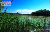 北京5大湿地公园避暑 10年后将逾40处