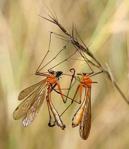 昆虫捕虫网_一对正在发生 \