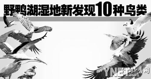 野鸭湖湿地新发现10种鸟类(图)