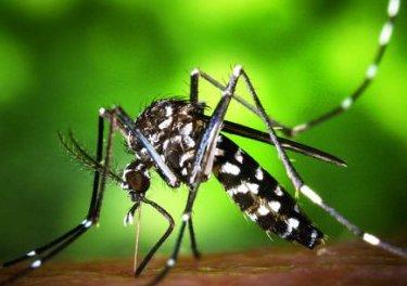 7.5亿只转基因蚊子被释放,美国打开了潘多拉魔盒?