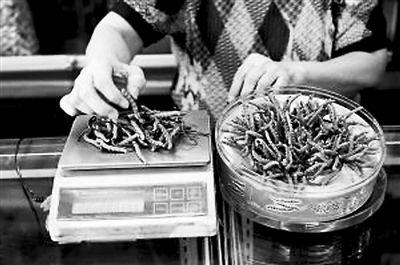 图为一商贩在给虫草称重。
