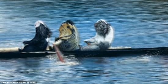 """日历1月照片:豚鼠们齐心协力参加""""划艇赛"""""""