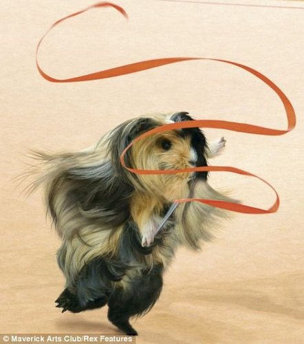 日历4月照片:飘逸的豚鼠体操