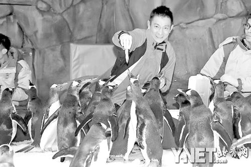 """香港海洋公园保育基金的保育大使刘德华在""""冰极天地""""与企鹅亲密接触"""