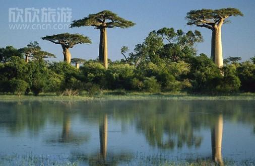 第三幕:非洲热带草原