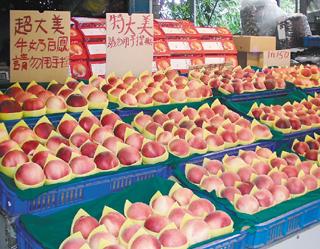 """桃园县复兴乡水蜜桃今年因雨多减产,果实硕大、甜美多汁,特别畅销。果农说,他们的水蜜桃才是""""正港的啦!""""报系资料照"""