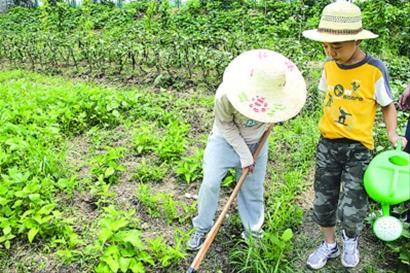 上海 爸爸/小朋友在农田中找到了从未有过的快乐