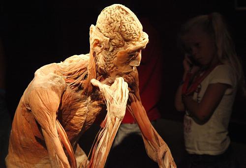 看人体网站_在比利时的奥斯坦德举办的现代木乃伊技术人体解剖展上,游客观看\