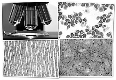 对生命进行远程控制:无线生物工程学成为医学研究前沿领域(1)__光明网