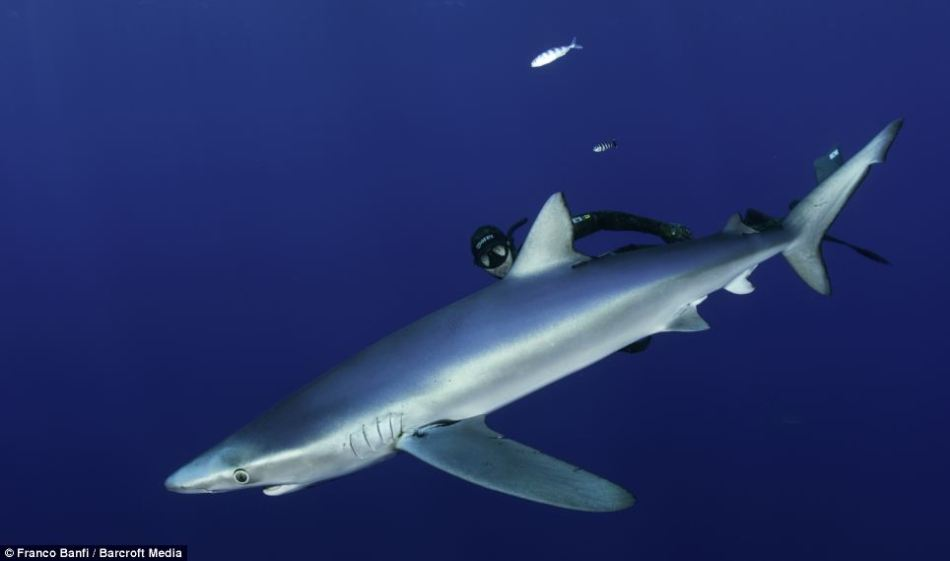 瑞士摄影师拍蓝鲨可爱犹如卡通形象(组图)