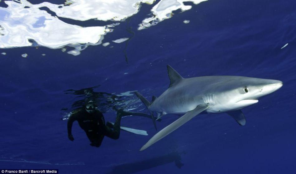 流浪地球电影囹�a_瑞士摄影师拍蓝鲨可爱犹如卡通形象(组图)