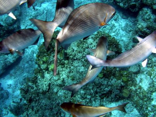 另类拍摄 800万像素潜水镜数码相机登场