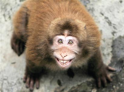 """""""养猴子不同于其它的动物"""