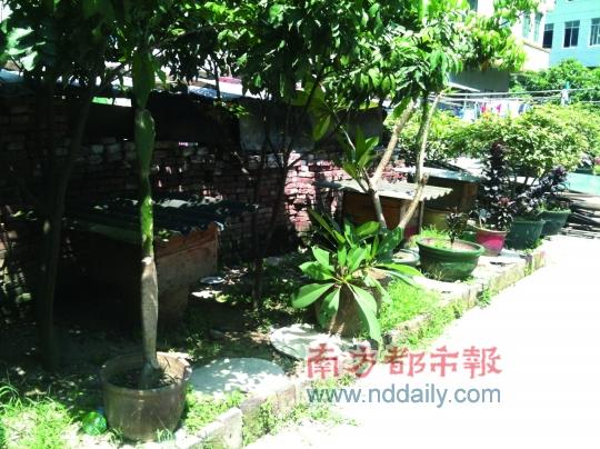 杨婷/白云太和镇一幼儿园旁养了三箱蜜蜂,家长担心小孩被蜇。南都...