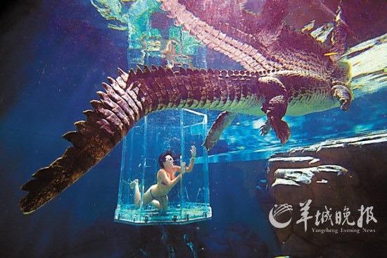 """体验与鳄鱼共舞的""""死亡之笼"""""""