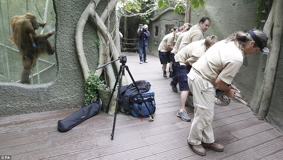 8人合力为英国最大蟒蛇体检;;