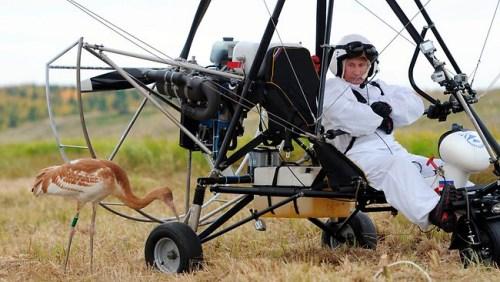 """普京参与俄鸟类学家在""""希望飞行""""项目框架内进行的实验。"""