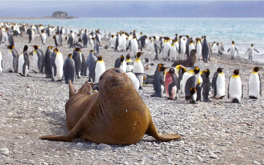 可爱 表情/栖息在南极半岛西尔瓦海湾的威德尔海豹。