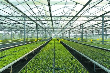 云南丽江,四川都江堰,海南等地建立基地,不仅满足大都市市民有机蔬菜