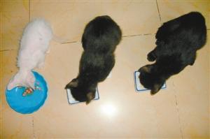 流浪猫 妈的/吃饭时间,有遵守秩序的,也有奋力拼抢的。