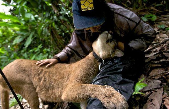 动物 宠物/外国人养巨型宠物,爱他们但请小心。