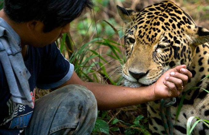 宠物 中国/外国人养巨型宠物,爱他们但请小心。