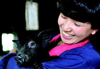 王娜都/对于每一头猪,王娜都像对待宠物一样看待。