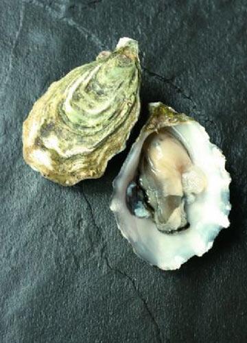 生蚝 牡蛎的区别