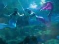 《今日京华》20120905 富国海底世界