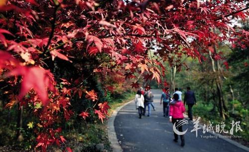 低语之森东方的神龛-最佳观赏时间:11月上、中旬   栖霞山位于南京市东北约22公里处的栖
