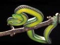 寻找终极蝮蛇