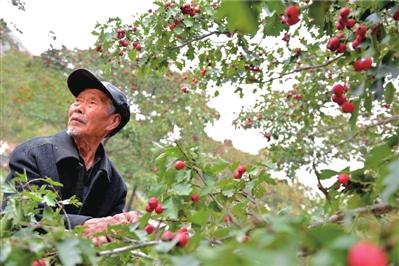 于清老人在山脚下果园里劳动时向山上望去。