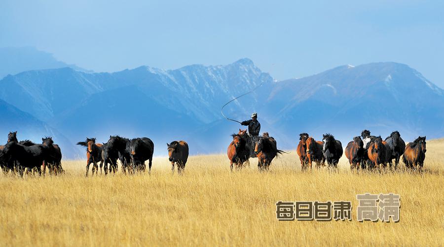 马群/挥舞马鞭,驱赶着马群奔跑。