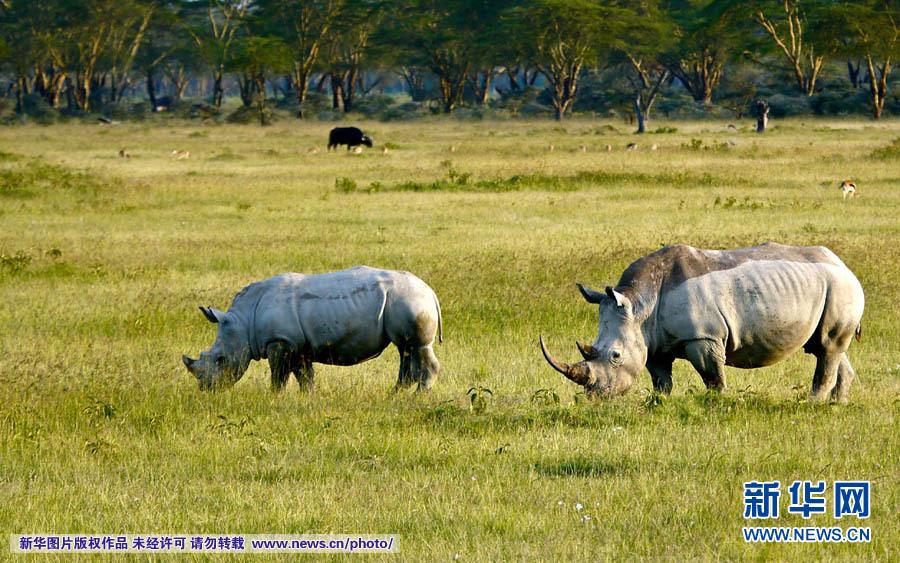 探访马赛马拉野生动物保护区(组图)