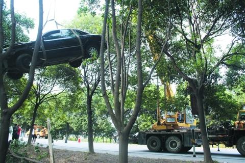 最终正面撞上一棵树后停了下来,车头完全变形,被撞上的树嵌在车头中间图片