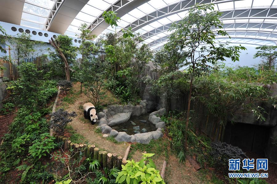 舍里_11月5日,来自中国的大熊猫\