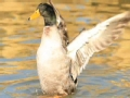 野鸭湖湿地公园