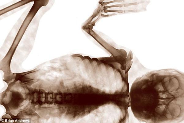 美艺术家合成模拟人类与动物异形杂交体透视图(1)