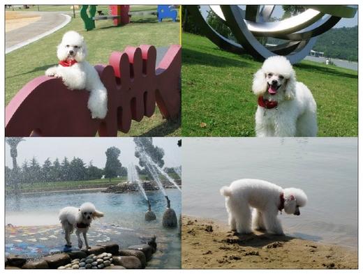 宠物凭票入园显档次 月湖雕塑公园狗票30元