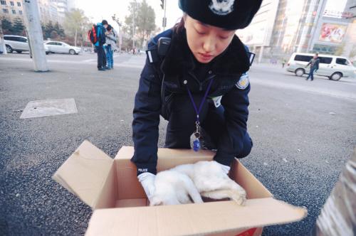 小猫被撞伤 沈阳美女交警处置特殊车祸(组图)