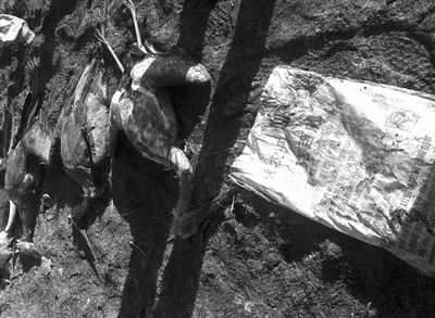 """11月13日,志愿者从湿地中的人造水坑中,打捞出一个印着""""克百威""""字样的农药袋。"""